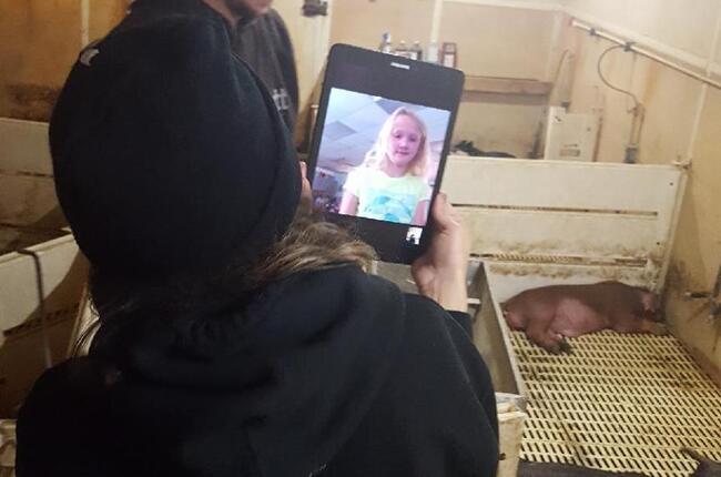 Pig+farm+2017+%233